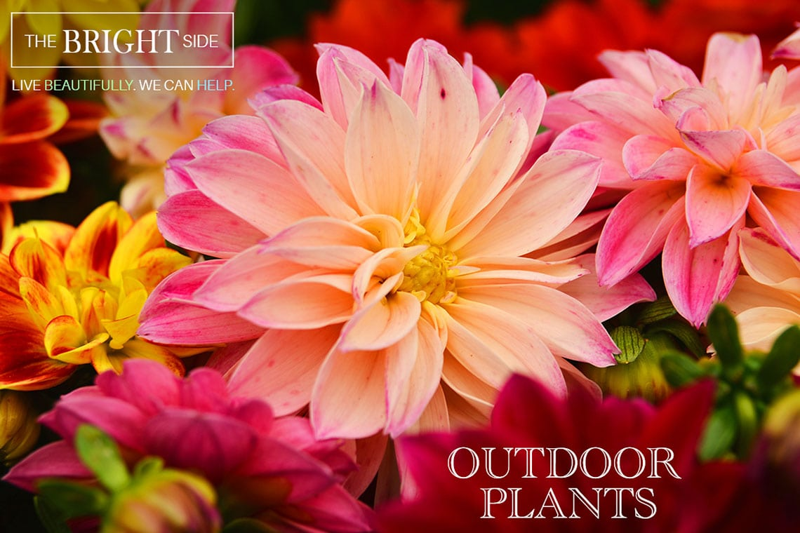 Outdoor Plants Green Thumb Nursery