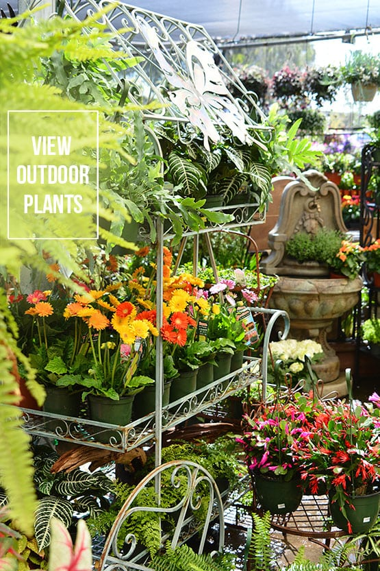 nursery outdoor plants 72 dpi 555x832