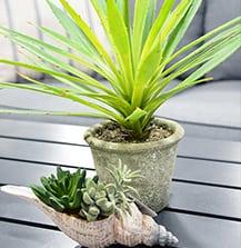succulent-home-decor