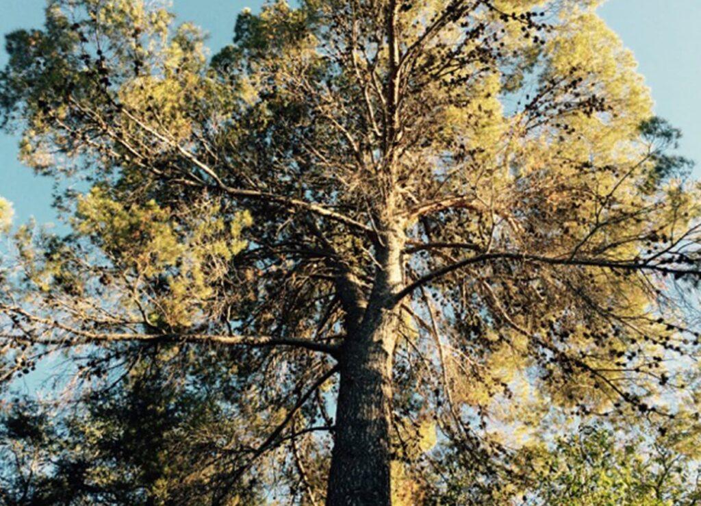 trees module
