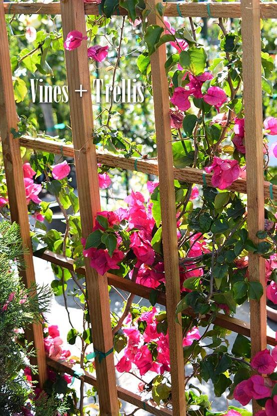 vines-and-trellis-72-555