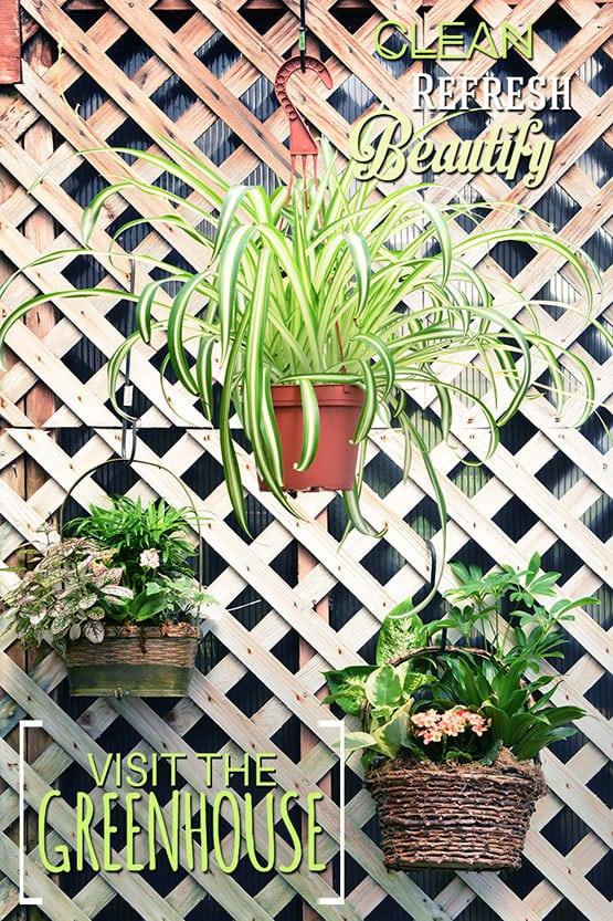 visit-the-greenhouse-72-555x832-web-save