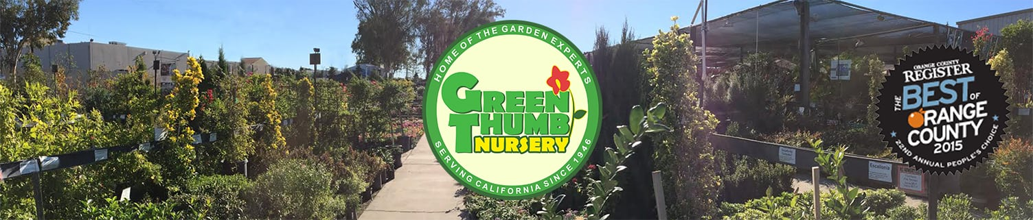 Green Thumb Nursery Lake Forest, Orange County\'s Best
