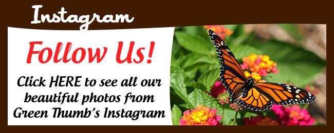 Website Social Media Page Instagram