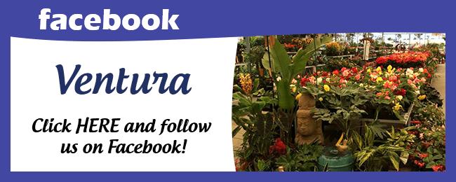 Website Social Media Page Ventura