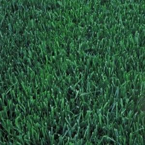 darker grass