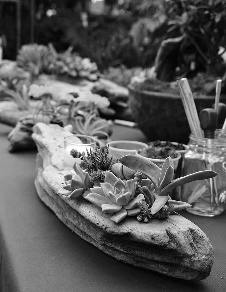 driftwood and succulents b&w web