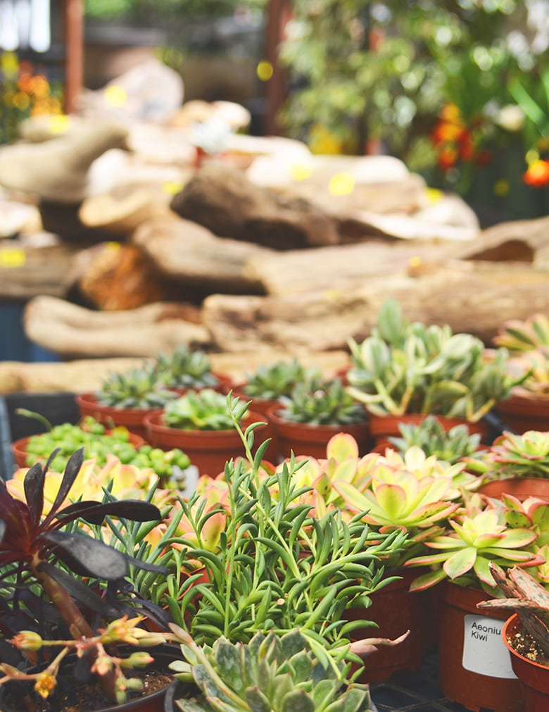 Green Thumb Nursery - Official Site