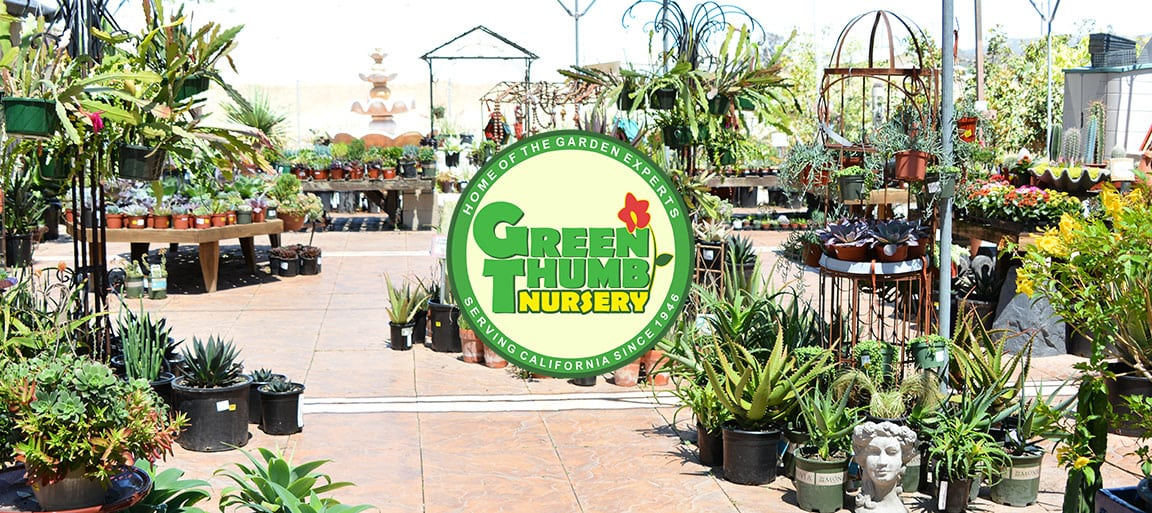 Green Thumb Nursery San Marcos