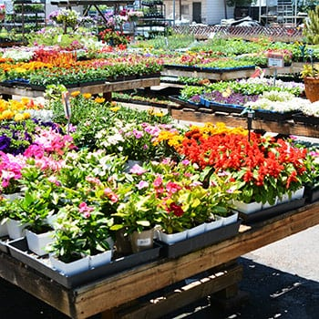Our San Go County Destination Garden Center Only Carries The Highest Quality Plants On Market We Receive Huge Shipments Of New Every Single