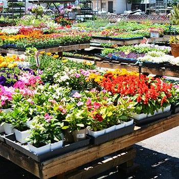 flowers-san-marcos