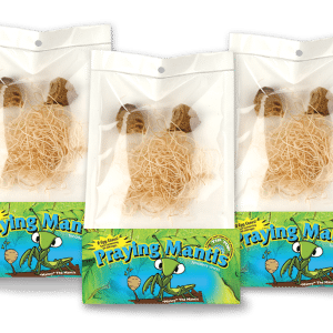 Live Praying Mantis Egg Cases Pouch