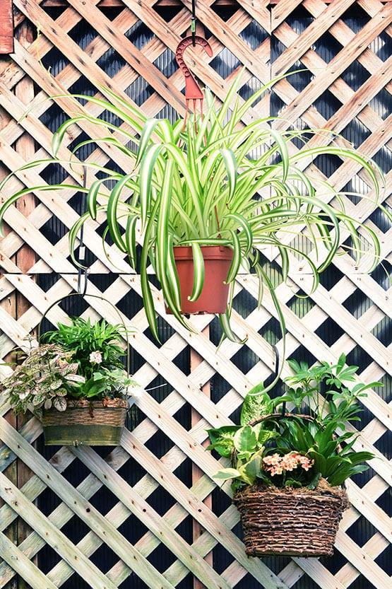hanging-baskets-72-555