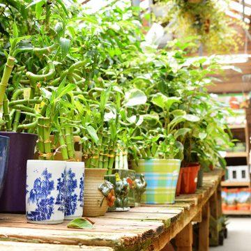 indoor-plants-72-555