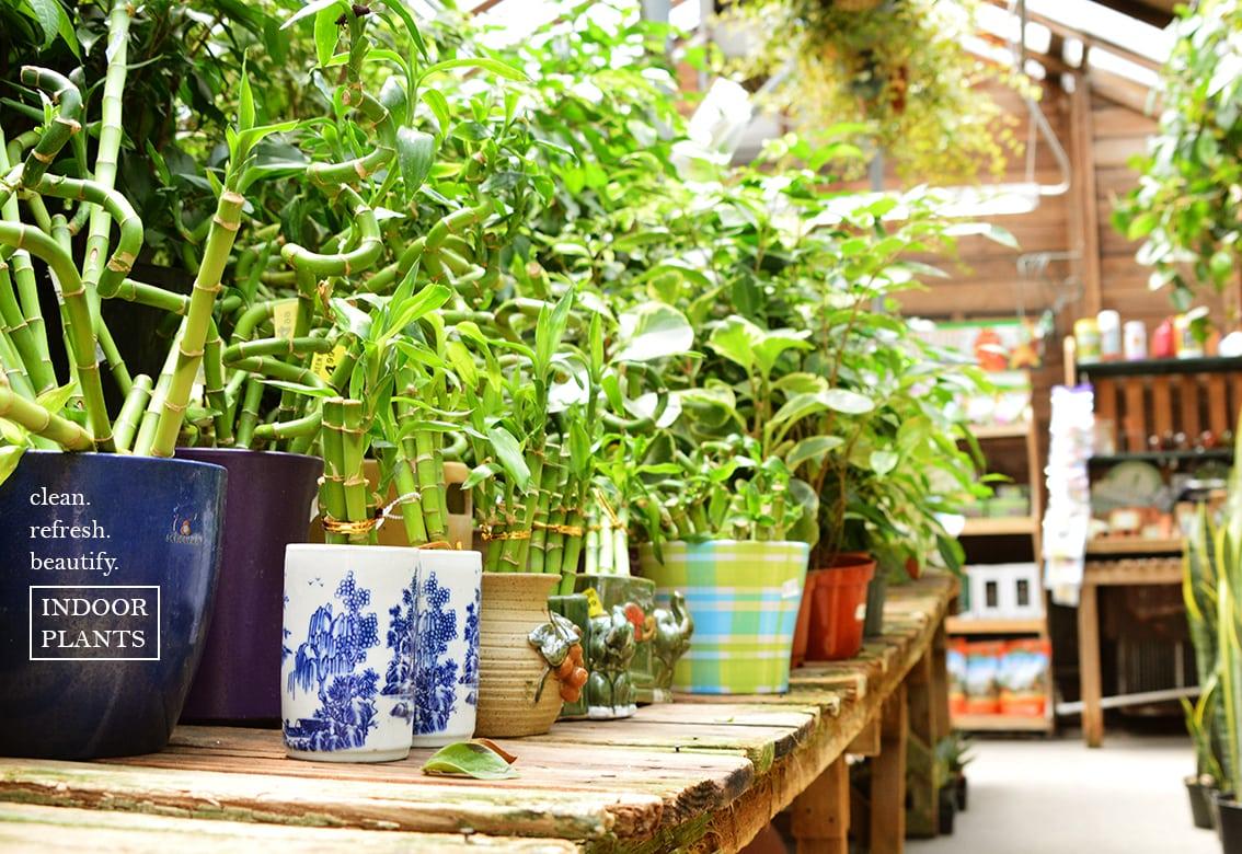 Indoor plants green thumb nursery for Indoor green plants images