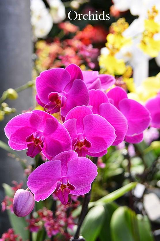 orchids-72-555