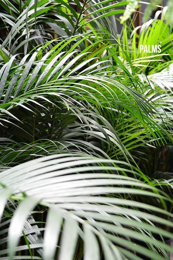 palms-72-555