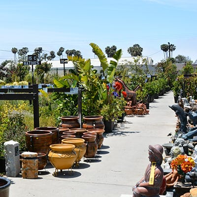 Ventura S Outdoor Plant Selection Is Huge Click The Photo To See All Of Diffe Kinds Plants That You Ll Find Out In Yard