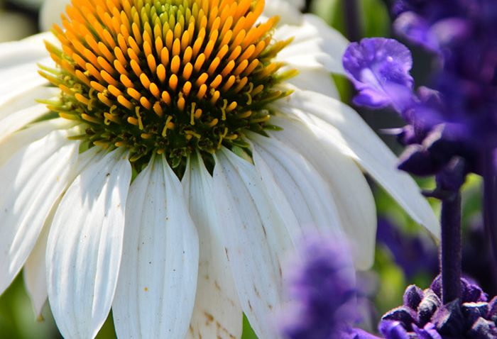 attract pollinators to my garden