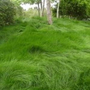greenwave_grass