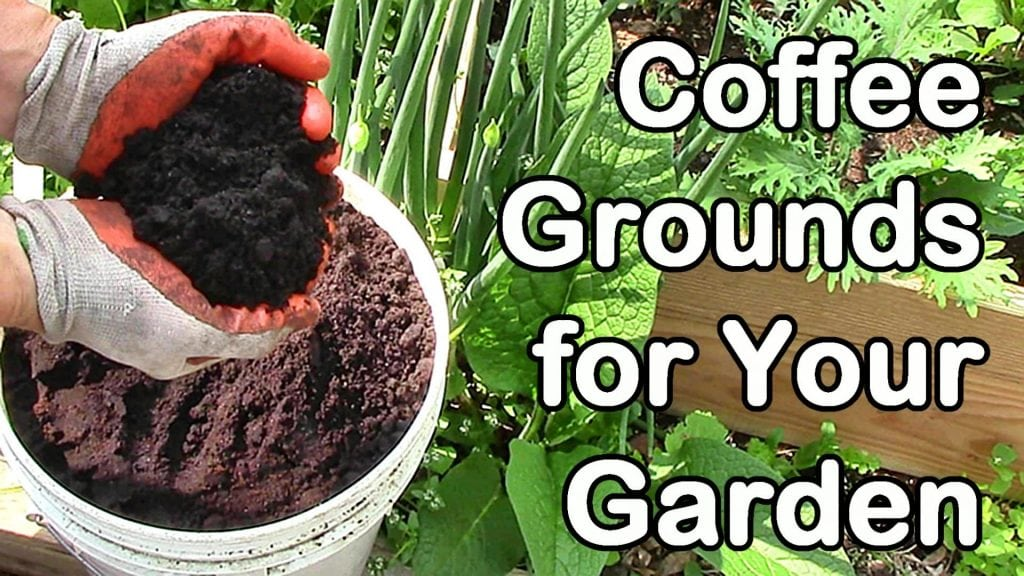 Are coffee grounds really good for your soil green thumb nursery Coffee grounds for garden