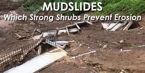 mudslide prevention