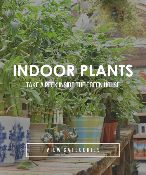 indoor-plants-categories22