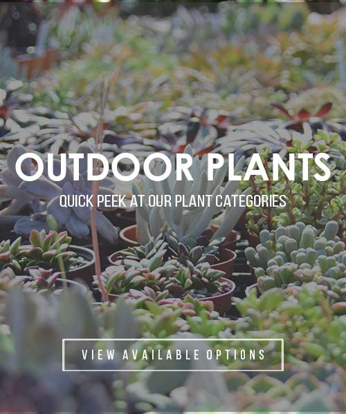 outdoor-plants22