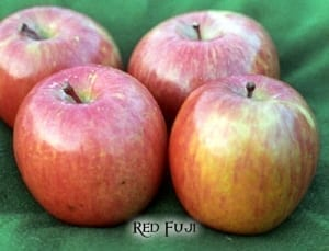red fuji apple
